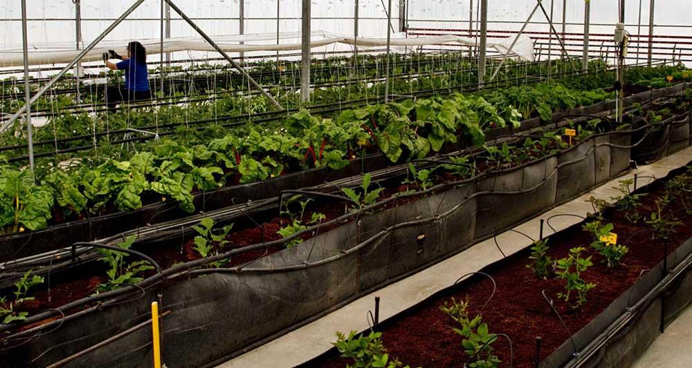 agricultores_plantones