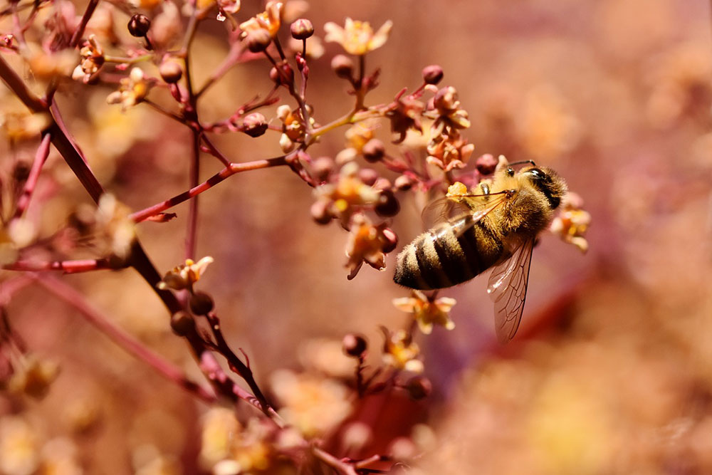 dia_abejas