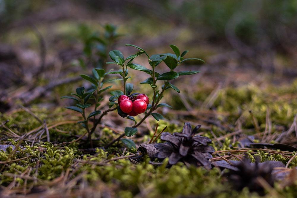 bosque_alimento_taller_septiembre_2020_1